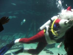 Swimming Santa